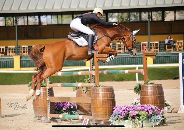 Showjumping and Sport Horse Stud in Wales and UK